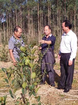 武宣县桥巩村农户种植成果